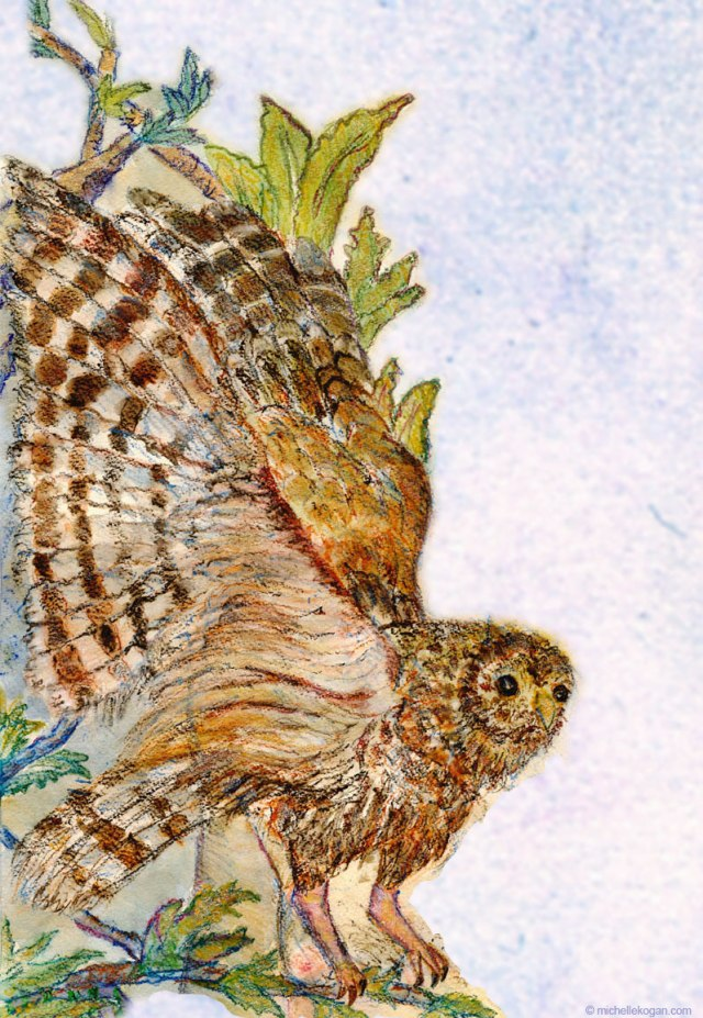 © Michelle Kogan Barred Owl, Watercolor and watercolor pencil and photoshop