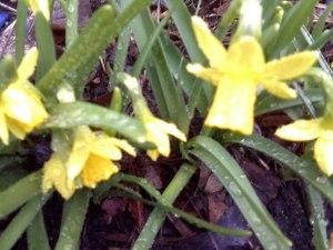 Michelle-Kogan-Narcissus-an