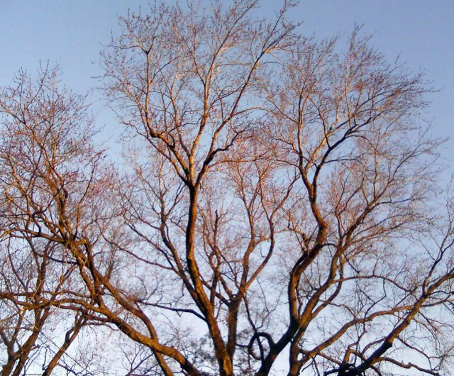 Michelle Kogan Windowpane Tree
