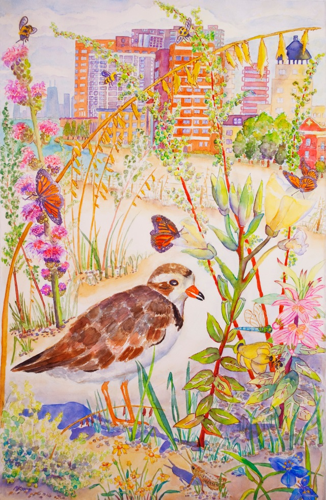 © Michelle Kogan Rogers Park Dunes Restoration with Piping Plover, endangered species, watercolor and watercolor on paper.