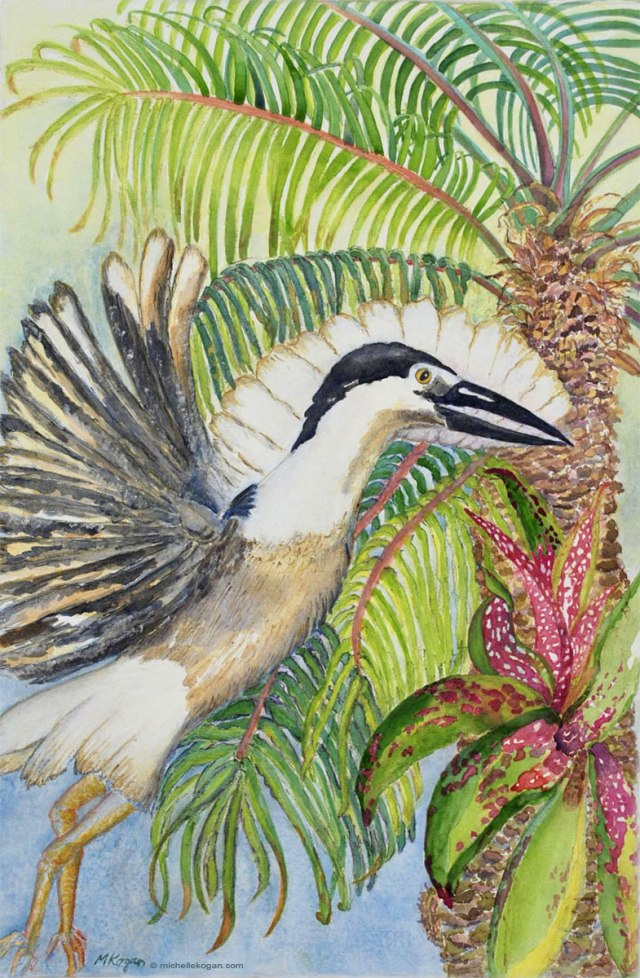 ©-MKogan Black Crowned Heron and Fern Palm, endangered species, watercolor and watercolor pencil.