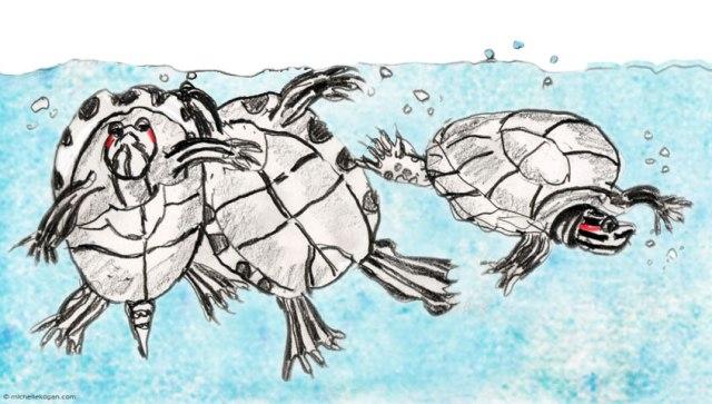 ©-MKoganRed-SLider-Turtles
