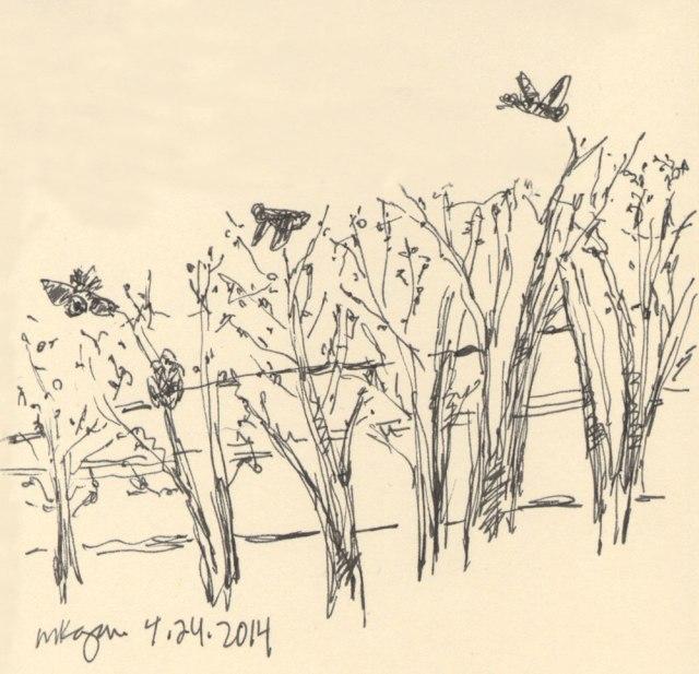 Treetops,-Napowrimo-day-24-2014-©-m-kogan