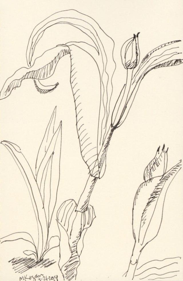 Tulips-Napowrimo-day-21-2014-©-m-kogan