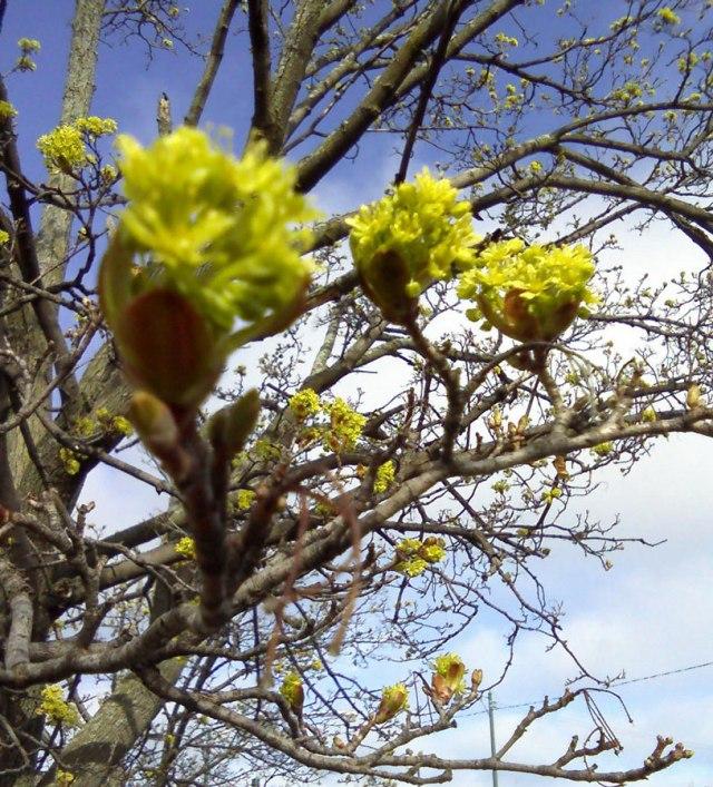 Yellow-blossoms-close-©-mkogan