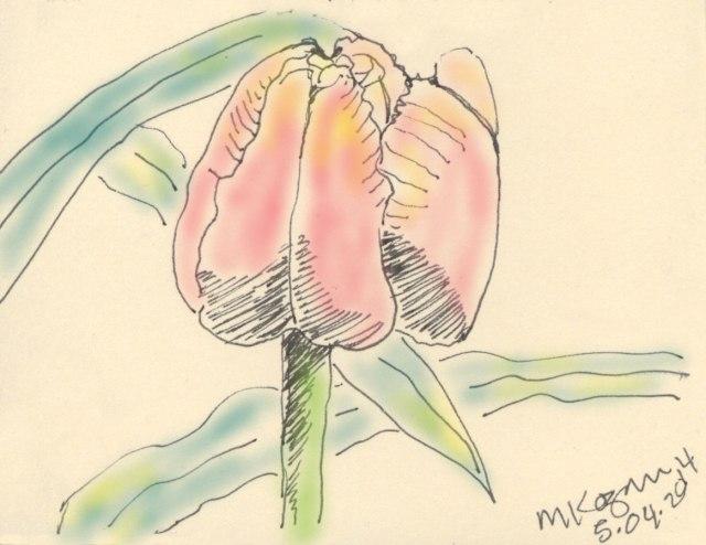 Tulip-Color5-04-2014-mkogan©-copy