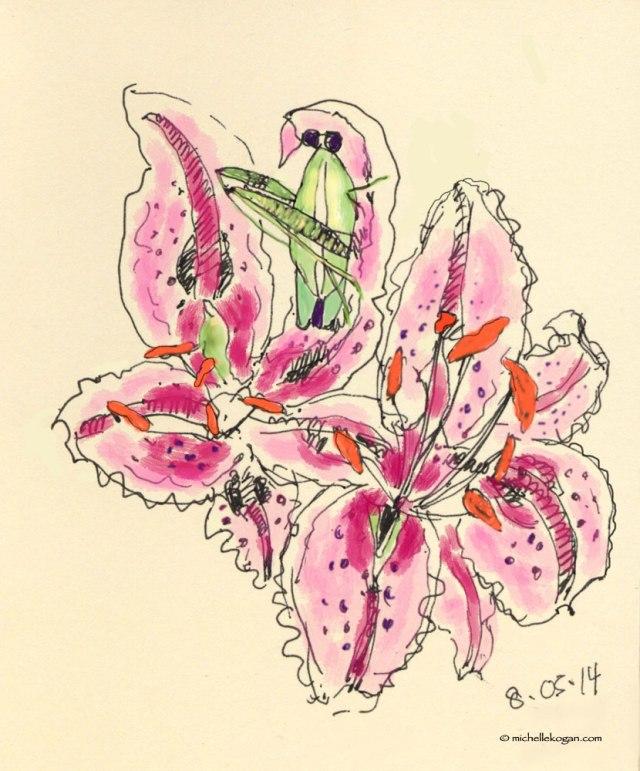 ©-M-Kogan--katydid-on-lily-A-8-5-2014--