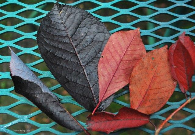 First-fall-Leaves-2014-©--2-M-Kogan