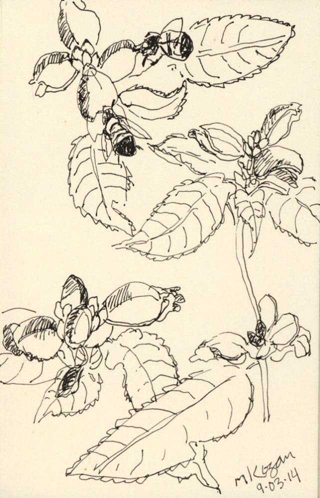 ©-M-Kogan-Turtle-head-and-bees-9-2014