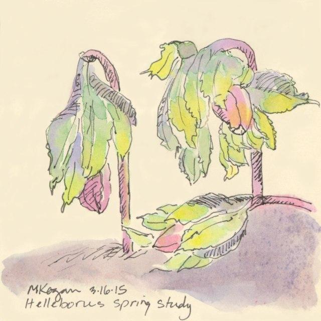 M-Kogan--Helleborus-color-3-19--2015