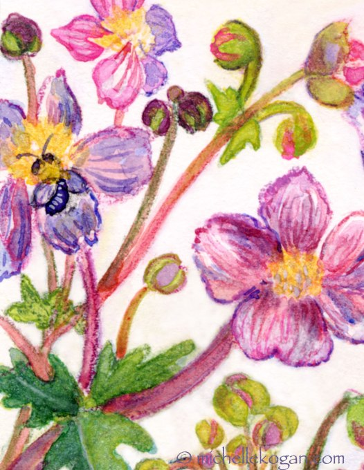 Japanese Anemone, Watercolor and watercolor pencil, © 2015 Michelle Kogan.