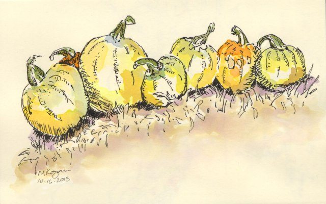 Seven-Fall-Beauties,-A-Pumpkins-Inktober-10-16-2015-©-mkogan-8-14-2015