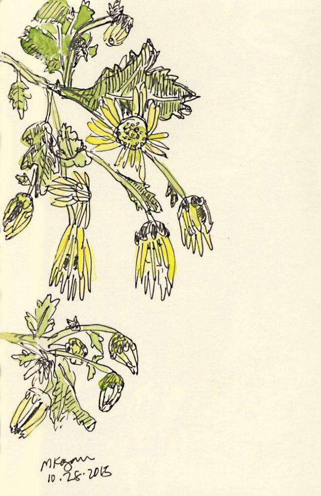 Yellow-Chrysanthemums-10-28-2015