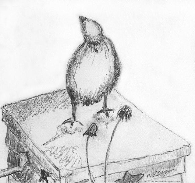 1b.-Heroic-Sparrow--M-Kogan-©--3--25-2016