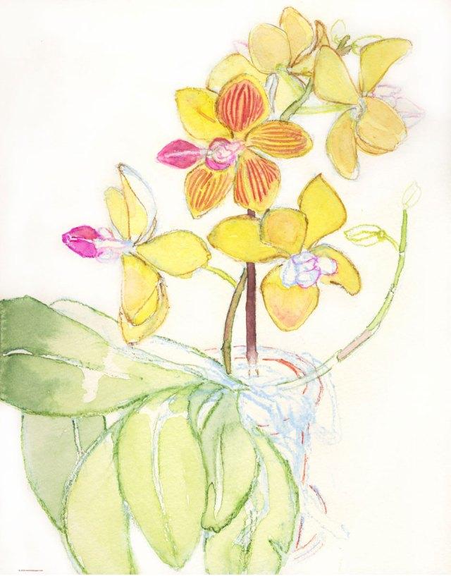 1.-Multicolored-orchid--4-24-2016