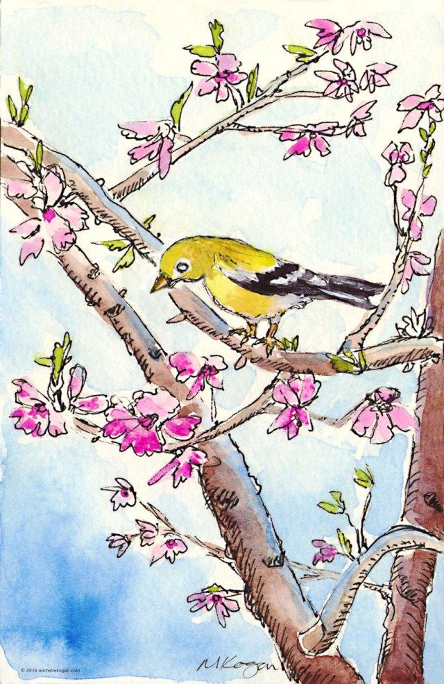 2-Backyard-blossoms-Girlie-Goldfinch-4-21-2016