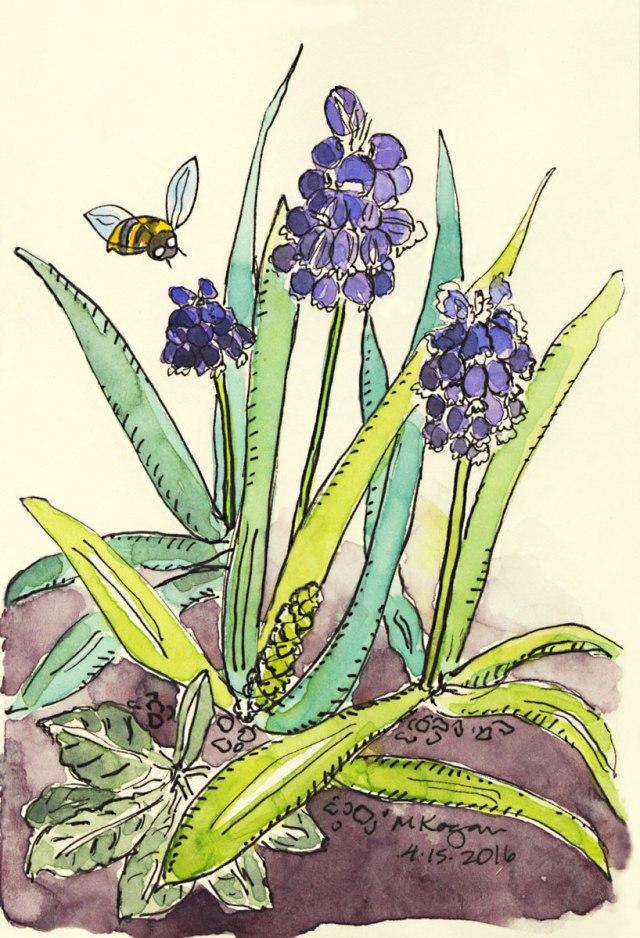 Purple-Hyacinths-4-15-2016