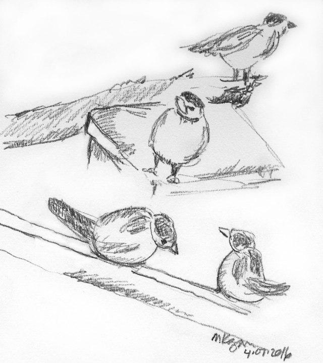 Sparrows-4-7-2016