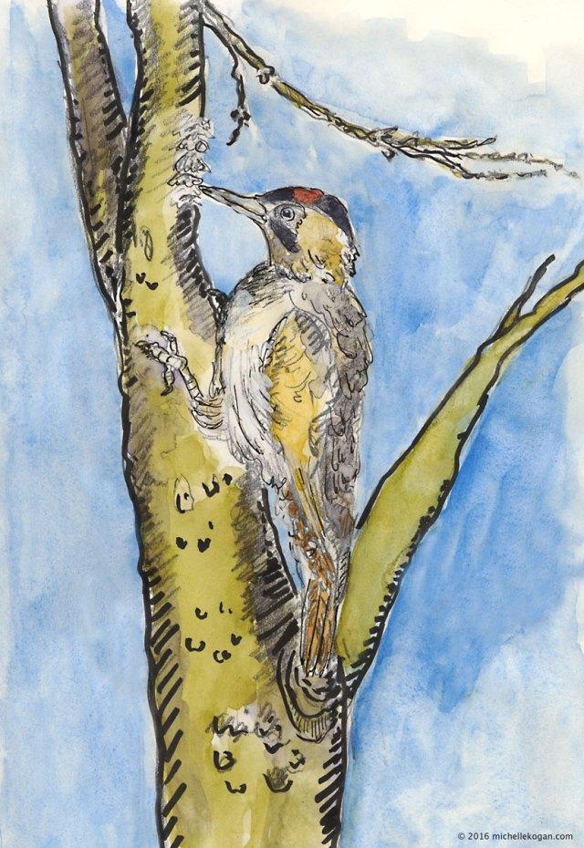 Woodpecker-rat-a-tap-4-16-2016