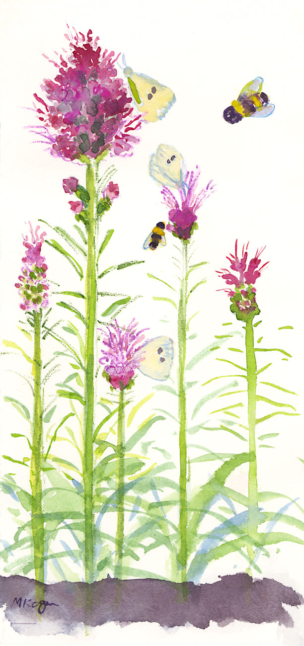 1.-Liatris-Spicata-Bees-and-Butterflies-7-22-2016