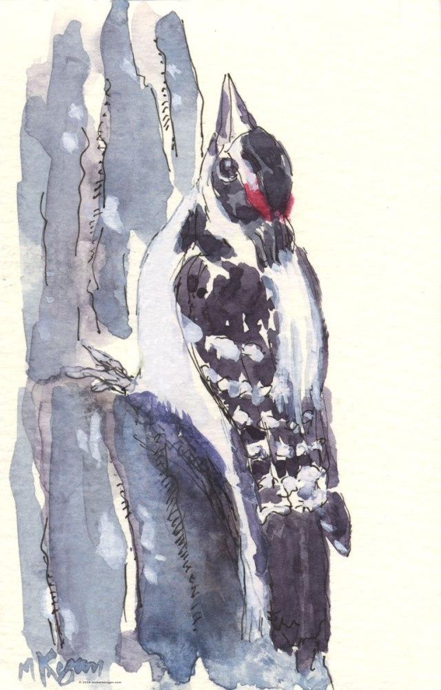 1.Rogers-Park-Woodpecker--7-24-2016