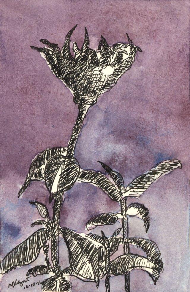 1-zinnias-at-dusk-inktober-10-10-2016