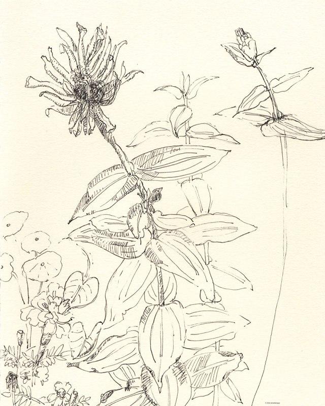 1-zinnias-marigolds-late-fall-flowers-10-16-2016