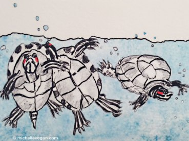 1-slider-turtle-mini-archival-detail-1