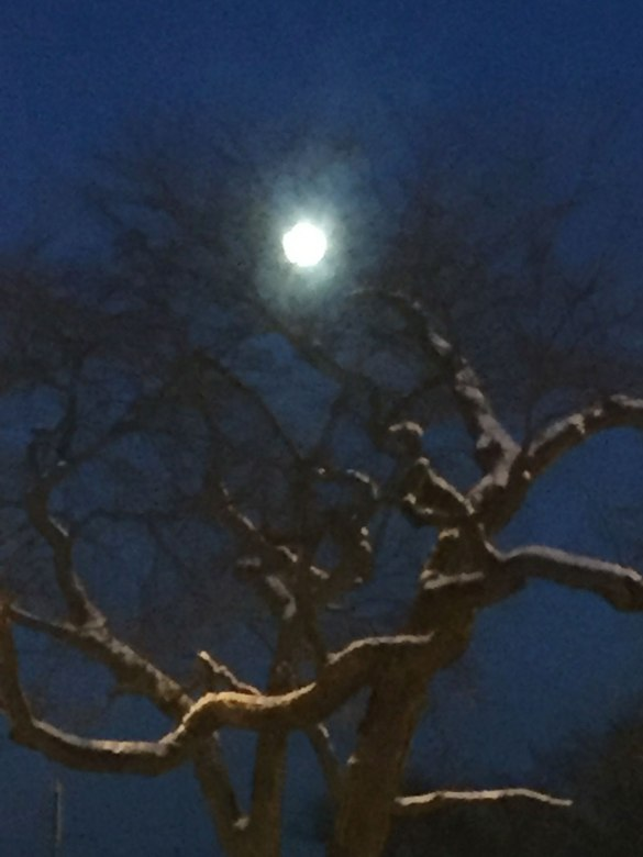 6a-rp-moon-over-beach-and-tree-12-2016