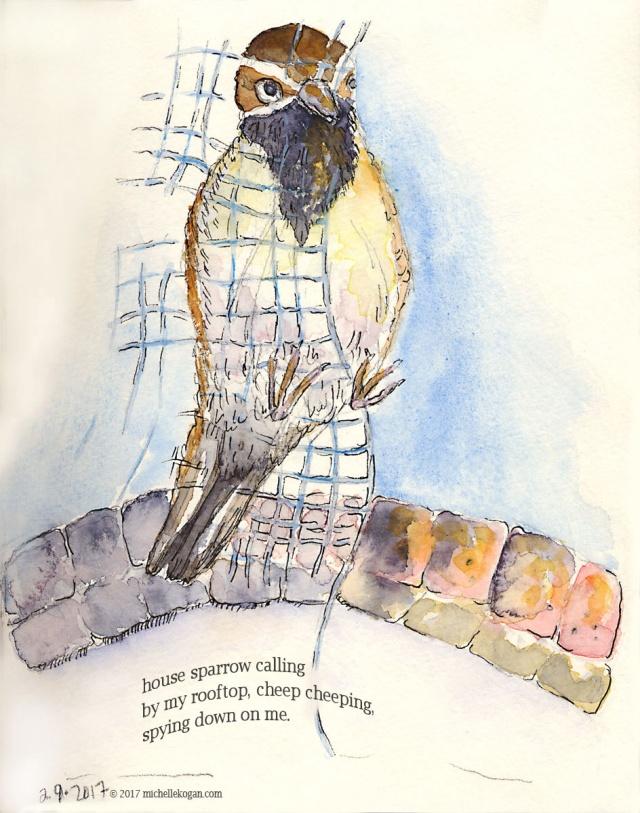 1a-house-sparrow-in-february-with-haiku-m-kogan-2-9-2017-copy