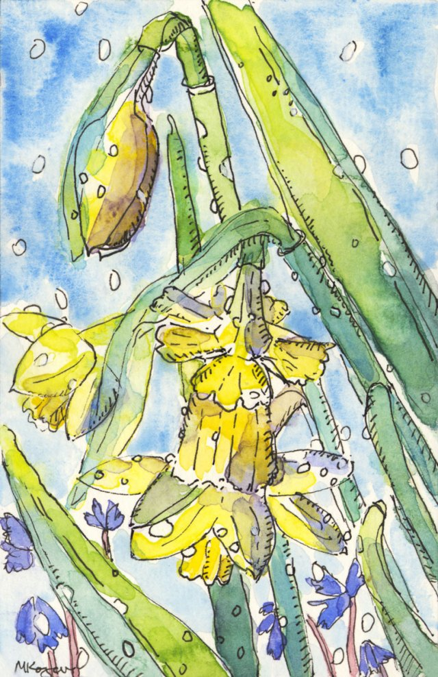 Narcissus-spring-rain--4-5-2017