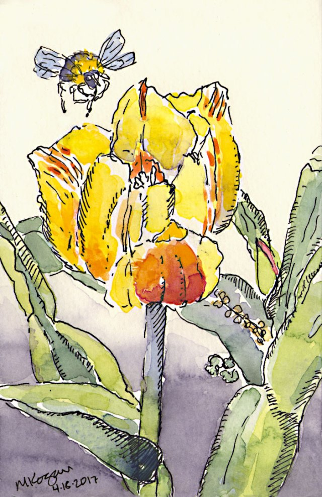 Towering-Tulip--4-18-2017