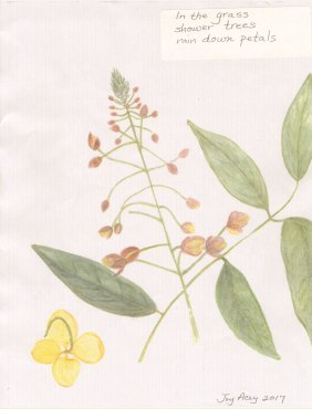 1-Joy-Acey-In-Grass-Petals-8-24-2017