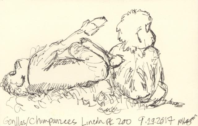 1-baby-gorilla--9-30-2017