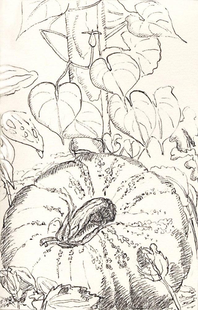 1a-Inktober-pumpkin-and-Moon-flower-vine-10-1-2017