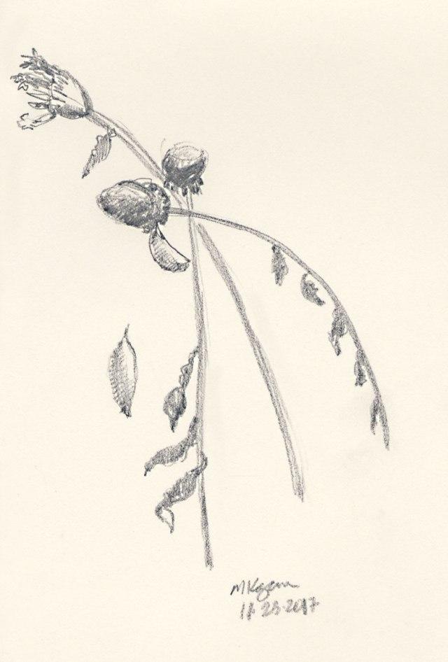 November-flowers-m-k0gan-11-23-2017