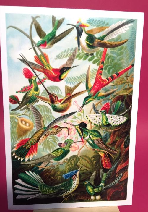 1-Trochilidae (Hummingbirds) , Ernst Haechel postcard from Tababtha 2-2018
