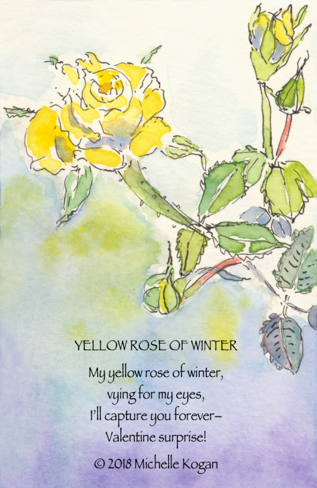 1-Yellow-rose-of-winter-2-14-2018-
