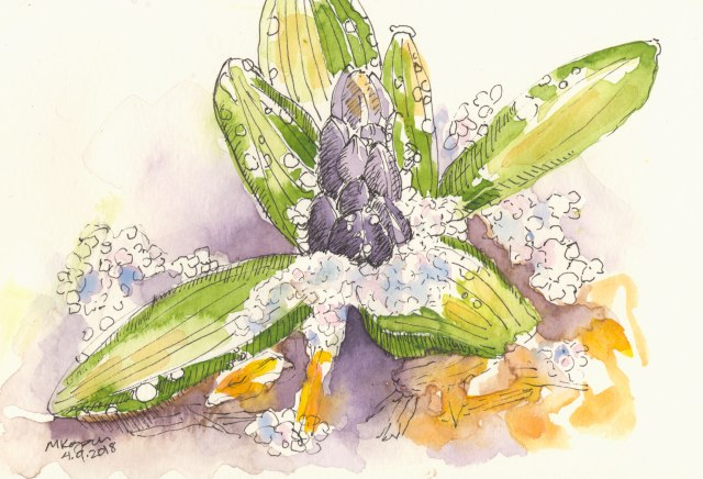 1-hyacinths-in-snow-4-9-2018-
