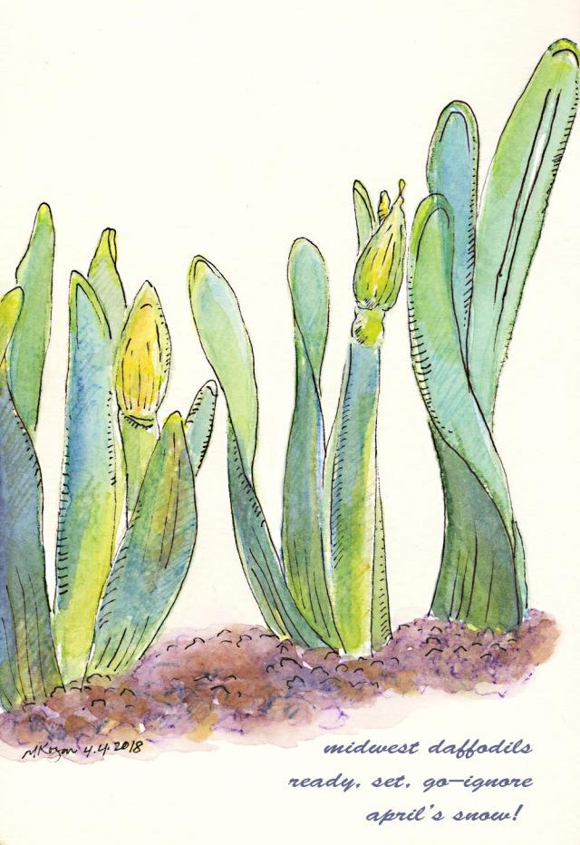 1a-Daffodils-in-Snow-m-kogan-4-4-2018--copy