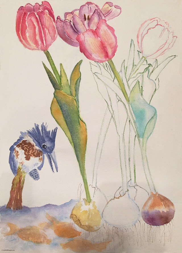 1- Belted kingfisher and tulips 2-7-2019