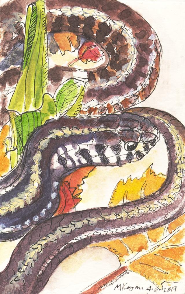 snake serpent --4-6-2019