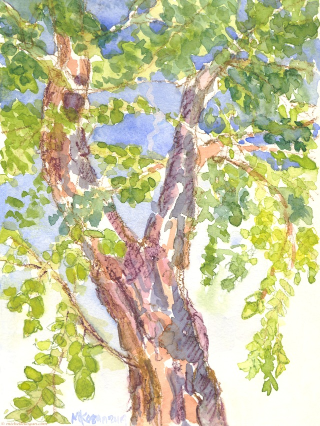 1-River Birch Tree looking up-8-15-2019