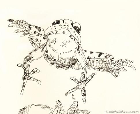 1-© Michelle Kogan Bullfrog jumping 2-27-2020