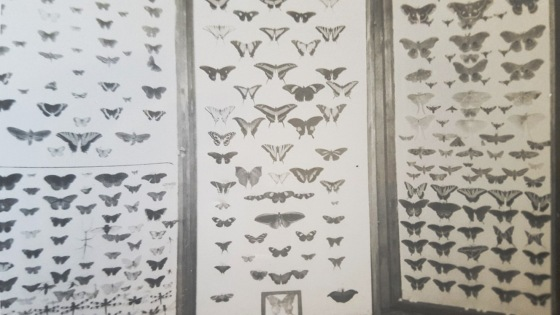 1- David Harrison Collections Moth Butterflies2020