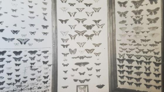 1- David Harrison Collections Moth Butterflies2020