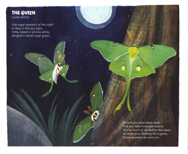2-D Harrison's Book After Dark Luna moth 2-13-2020