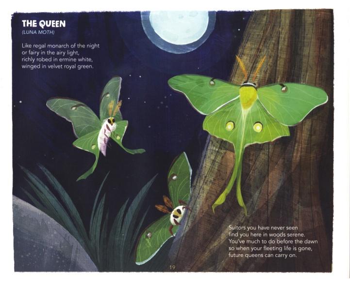 2-D Harrison's Book After Dark Luna moth 2-13-2020