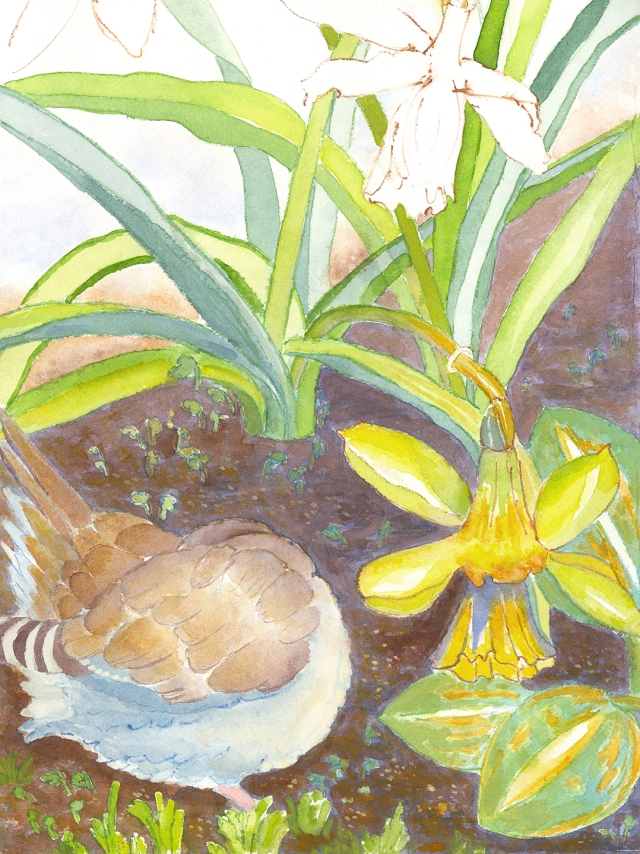 1-mourning dove and narcissus wip 4-23-2020