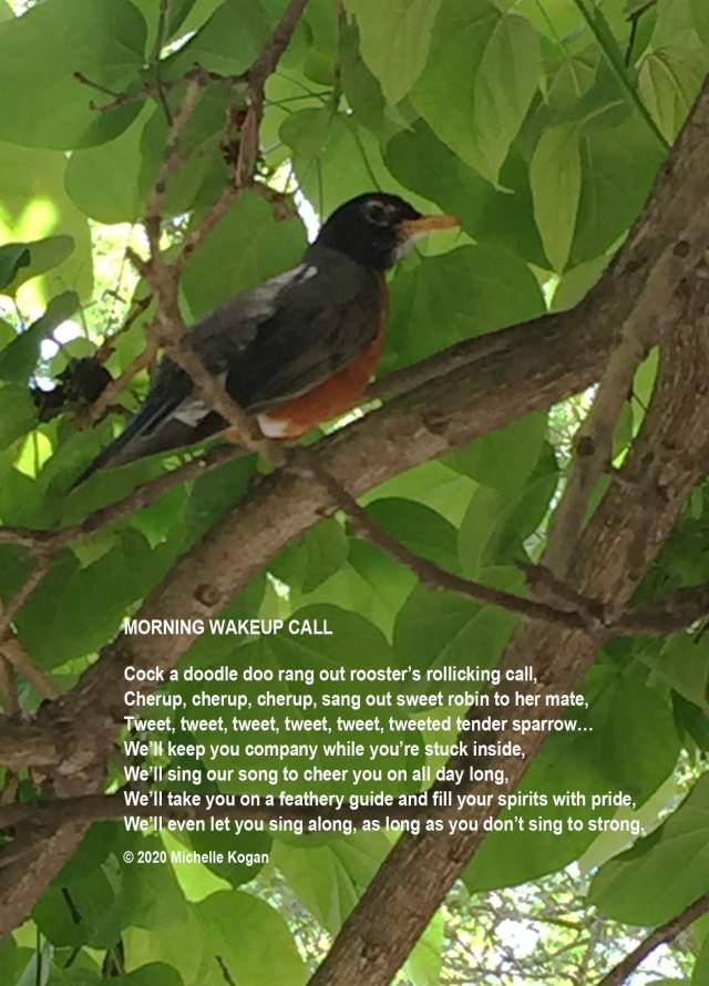 1--Robin-in-Catalpa-tree- and poem -4-1-2020